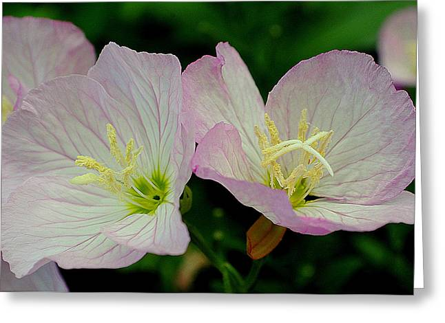 Tremendous Greeting Cards - Delicate Greeting Card by Frozen in Time Fine Art Photography