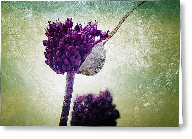 Alliums Greeting Cards - Delicate Greeting Card by Stylianos Kleanthous