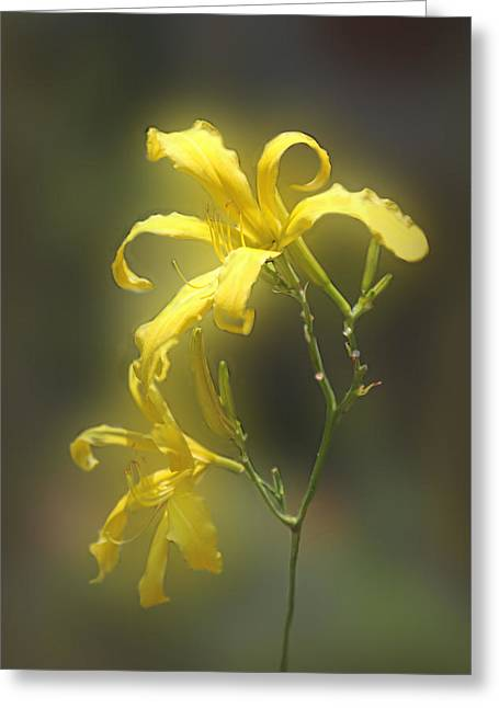 Nature Pyrography Greeting Cards - Delicate Yellow Lilies Greeting Card by Linda Phelps