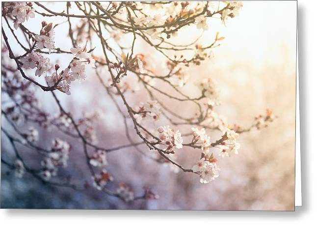 Pink Flower Branch Greeting Cards - Delightful Spring Greeting Card by Danielle Denham