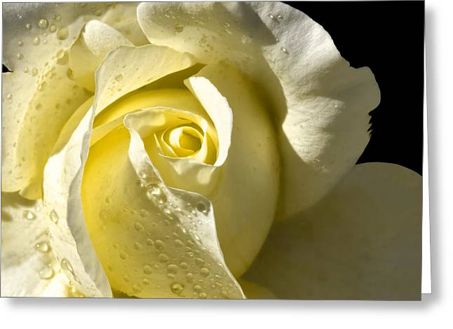 Devine Greeting Cards - Delightful Yellow Rose With Dew Greeting Card by Tracie Kaska