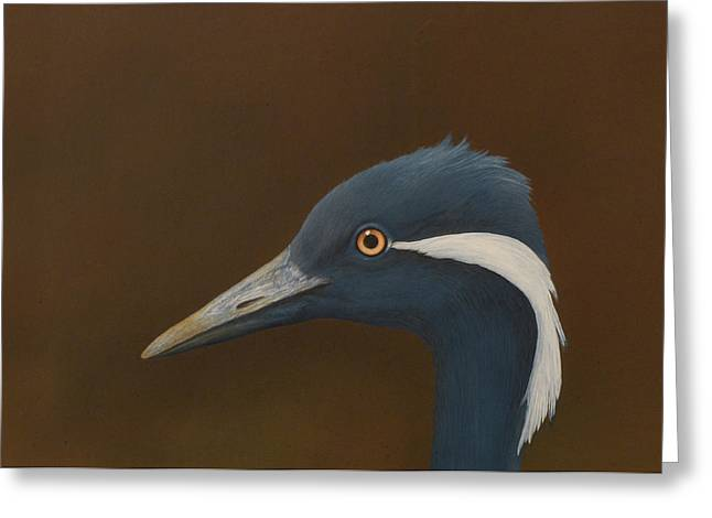 Demoiselles Greeting Cards - Demoiselle Crane Greeting Card by Norm Holmberg