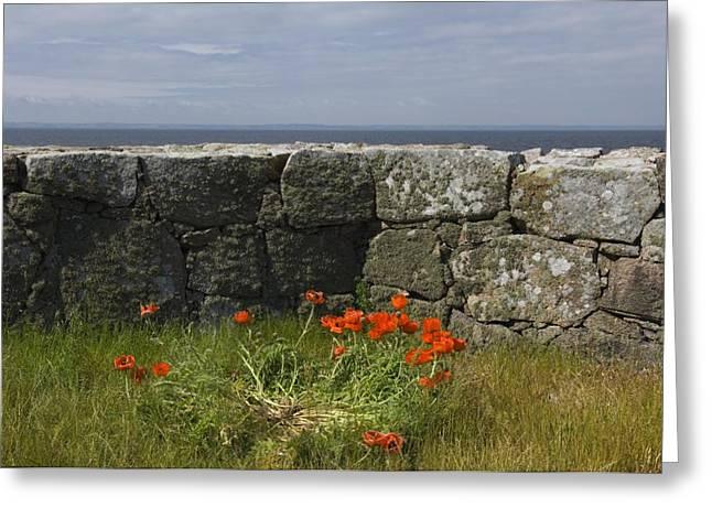 Oes Greeting Cards - Denmark, Christians Oe Island, Poppy Greeting Card by Keenpress
