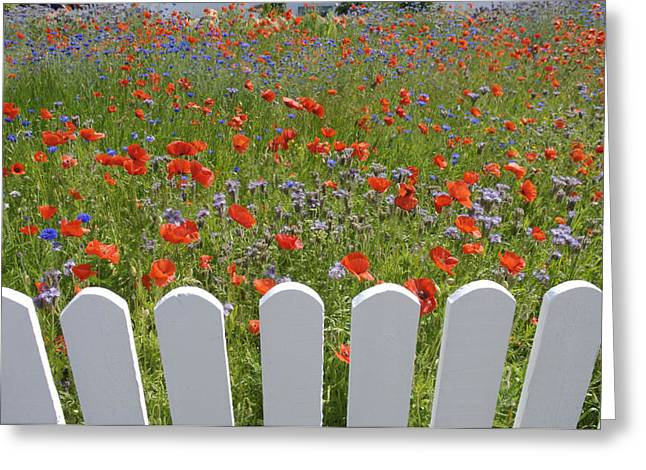 Skagen Greeting Cards - Denmark, Skagen, Garden Of Red Poppies Greeting Card by Keenpress