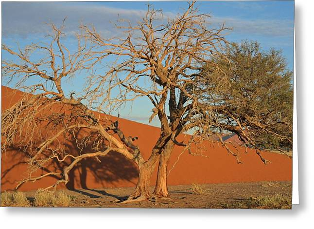 Sanddune Greeting Cards - Desert Beauty Greeting Card by Joe  Burns