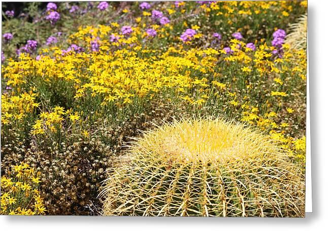 Desert Greeting Cards - Desert Garden Greeting Card by Carol Groenen