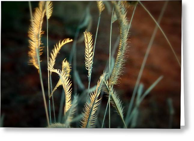 Breezy Greeting Cards - Desert Grasses Greeting Card by Cindy Wright