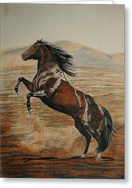 Melita Greeting Cards - Desert horse Greeting Card by Melita Safran