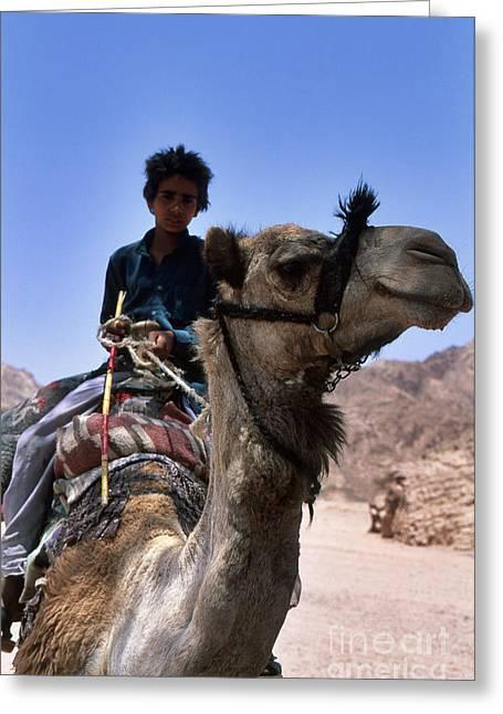 Sinai Photographs Greeting Cards - Desert Locomotion Greeting Card by Heiko Koehrer-Wagner