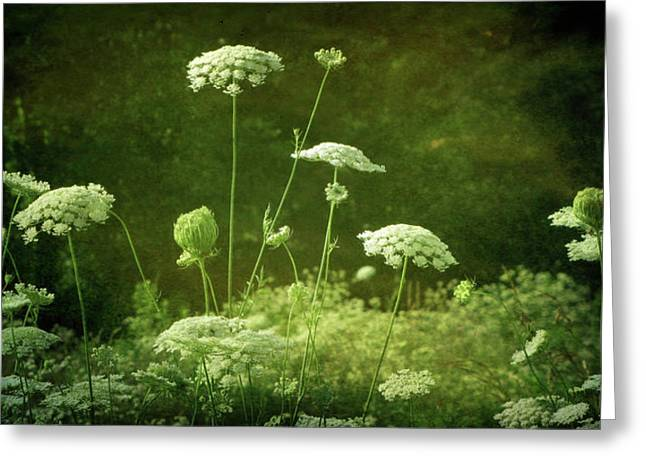 Queen Annes Lace Greeting Cards - DEsprit II Greeting Card by Amy Tyler