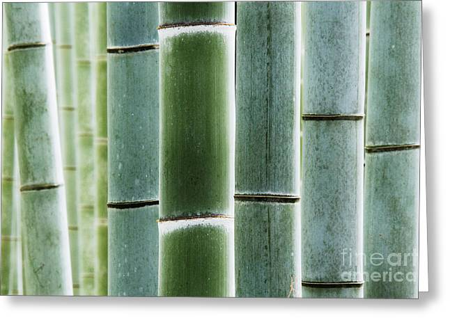 Kyoto Greeting Cards - Detail of Bamboo in a Forest Greeting Card by Jeremy Woodhouse