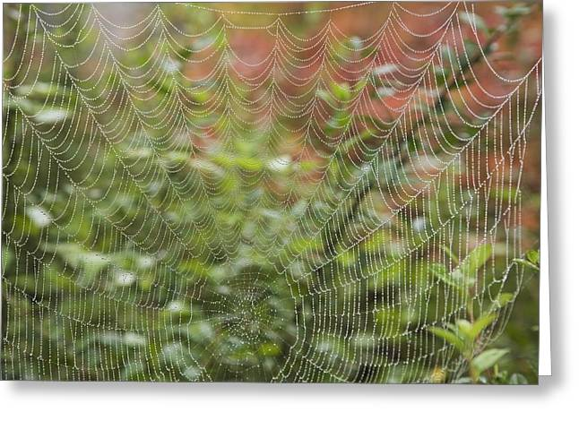 Ground Level Greeting Cards - Detail Of Spider Web Greeting Card by Craig Tuttle