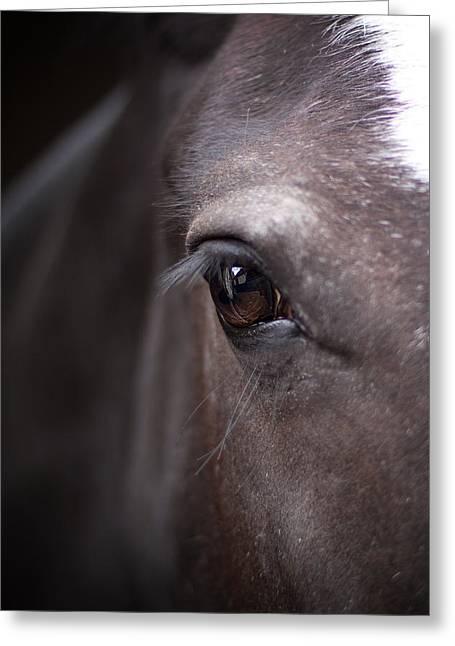 Eyelids Greeting Cards - Detailed close up of black horses eye Greeting Card by Ethiriel  Photography