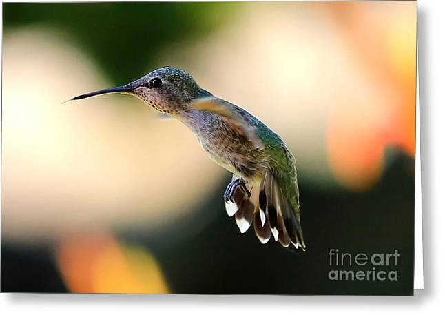 Wildlife In Gardens Greeting Cards - Determined Hummingbird Greeting Card by Carol Groenen