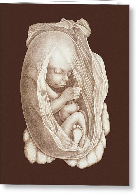 Embryology Greeting Cards - Development Of A Foetus In A Womb, 1891 Greeting Card by Mehau Kulyk