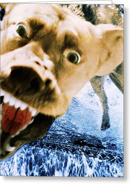 Diving Dog Greeting Cards - Devil Dog Greeting Card by Jill Reger