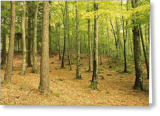 Forest Floor Greeting Cards - Devils Glen Woods, County Wicklow Greeting Card by Richard Cummins