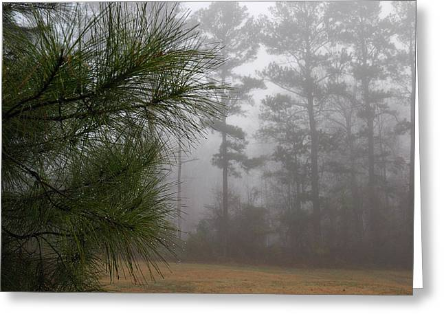 Pine Needles Greeting Cards - Dew-covered Pine Branches On A Foggy Greeting Card by Darlyne A. Murawski