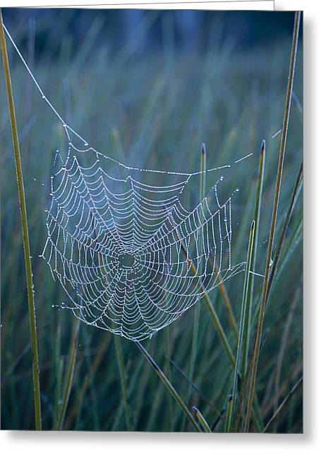 Trapeze Spider Greeting Cards - Dew Drops Cling To A Spider Web Greeting Card by Jason Edwards