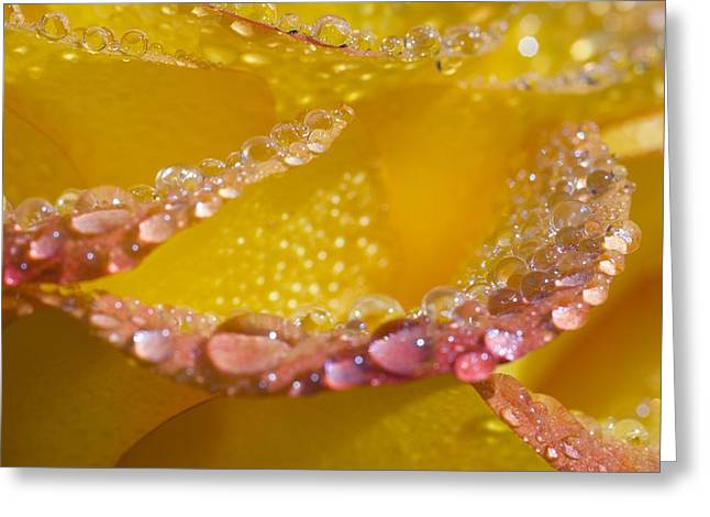 Moist Greeting Cards - Dew On Flower Petals Greeting Card by Craig Tuttle