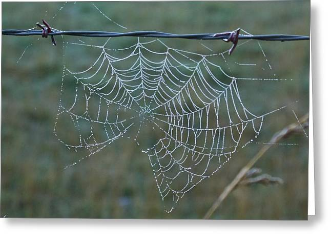 Lawrence County Greeting Cards - Dew on the Web Greeting Card by Douglas Barnett