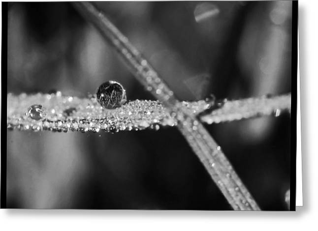 Wet Grass Greeting Cards - Dew to Drought Black and White 03 Greeting Card by Karen Musick