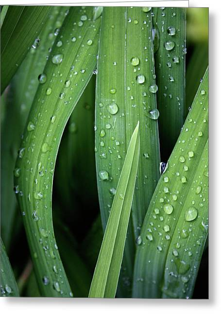 Abstract Digital Photographs Greeting Cards - Dew to You Greeting Card by Jerry Cordeiro