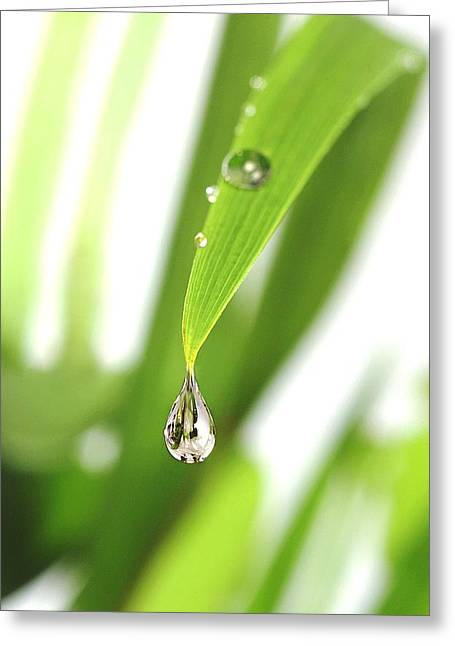Dewdrops Greeting Cards - Dewdrop On A Leaf Greeting Card by Crown Copyrighthealth & Safety Laboratory