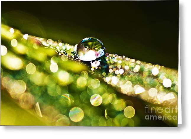 Dewdrop On Lemongrass Greeting Card by Thomas R Fletcher