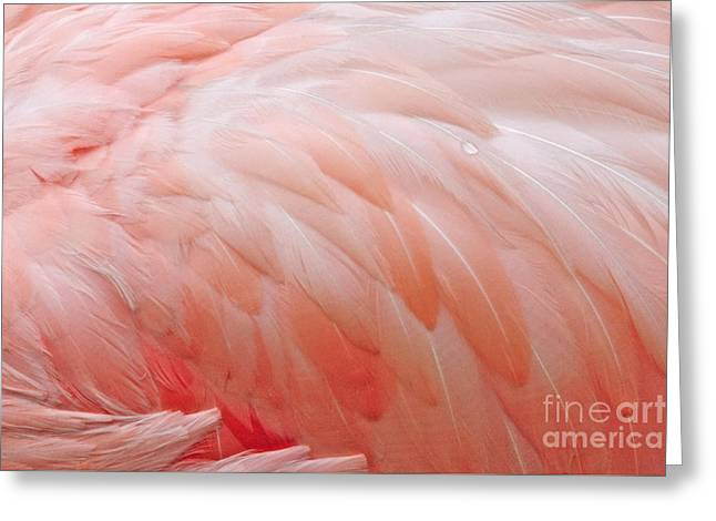 Dewy Featherbed Greeting Card by Cindy Lee Longhini