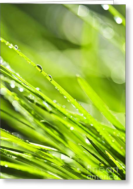 Drop Greeting Cards - Dewy green grass  Greeting Card by Elena Elisseeva