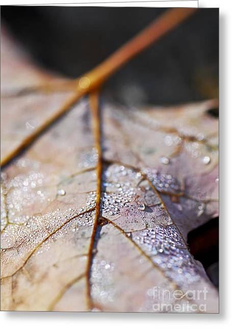 Dew Greeting Cards - Dewy leaf Greeting Card by Elena Elisseeva