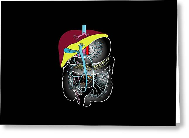 Gi Greeting Cards - Digestive System, Artwork Greeting Card by Francis Leroy, Biocosmos