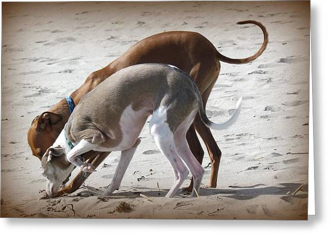Digging In The Sand Greeting Cards - Diggin It Greeting Card by Lori Pessin Lafargue