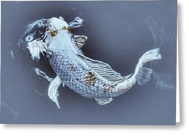 Fish Greeting Cards - Digital Art Koi Greeting Card by Don Mann