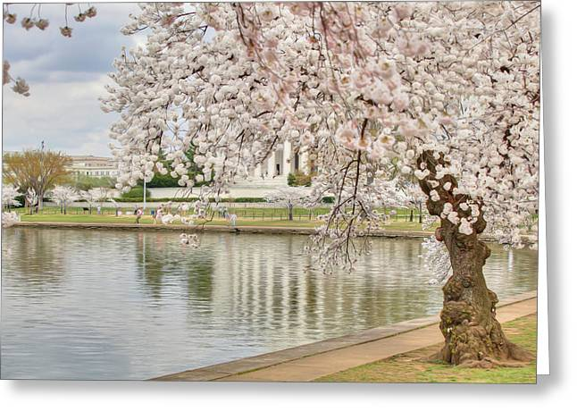 White Digital Greeting Cards - Digital Liquid - Cherry Blossoms Washington DC 6 Greeting Card by Metro DC Photography