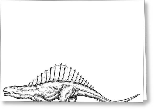 Nature Study Drawings Greeting Cards - Dimetrodon - Dinosaur Greeting Card by Karl Addison