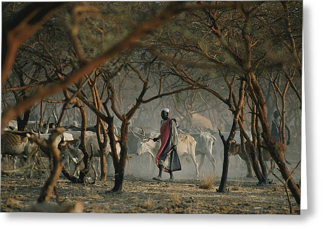Rom Greeting Cards - Dinka Tribesmen And Their Cattle Escape Greeting Card by Randy Olson