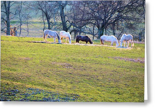Winter Scenes Rural Scenes Greeting Cards - Dinner At Five Greeting Card by Jan Amiss Photography