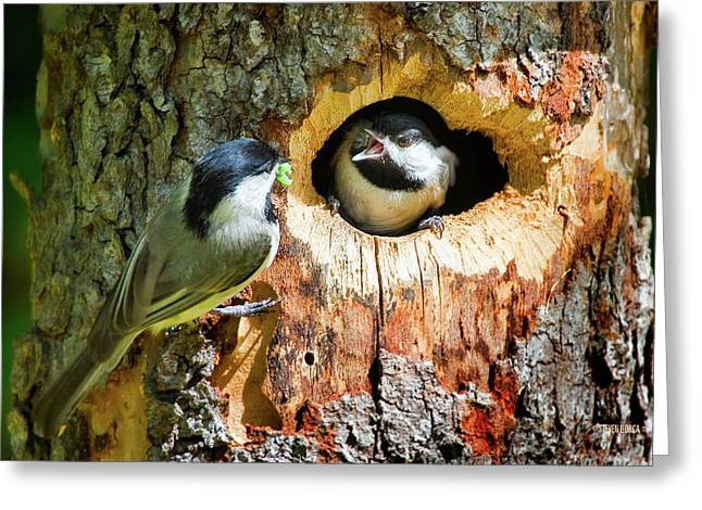 Feeding Birds Greeting Cards - Dinner Delievery Greeting Card by Steven Llorca