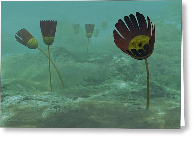 Aquatic Greeting Cards - Dinomischus Primitive Animals, Artwork Greeting Card by Walter Myers