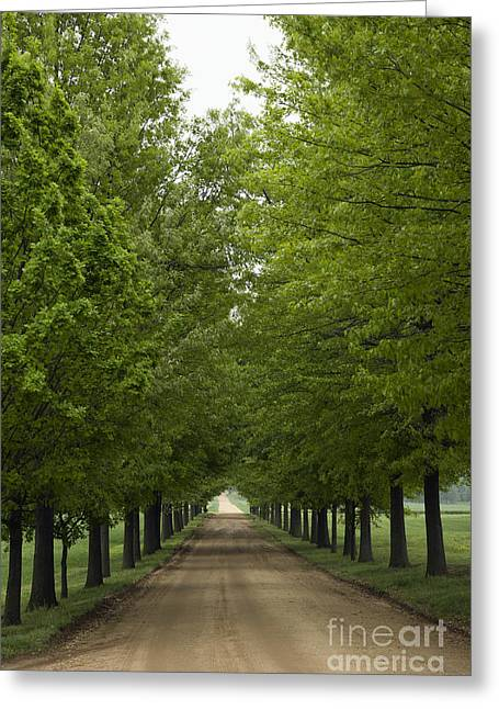 Country Dirt Roads Greeting Cards - Dirt Road Between Trees Greeting Card by Roberto Westbrook