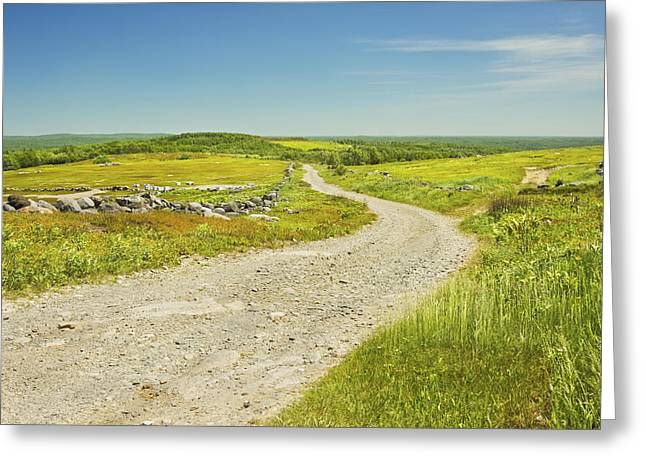 Rural Maine Roads Photographs Greeting Cards - Dirt Road Going Through Large Blueberry Field Maine Greeting Card by Keith Webber Jr
