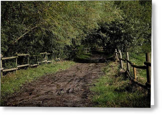 Country Dirt Roads Greeting Cards - Dirt Road Greeting Card by Odd Jeppesen