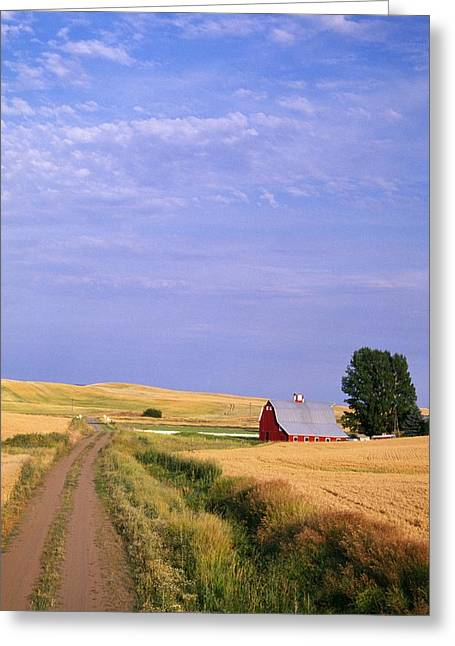 Gravel Road Greeting Cards - Dirt Road Through Wheat Field Greeting Card by Natural Selection Craig Tuttle