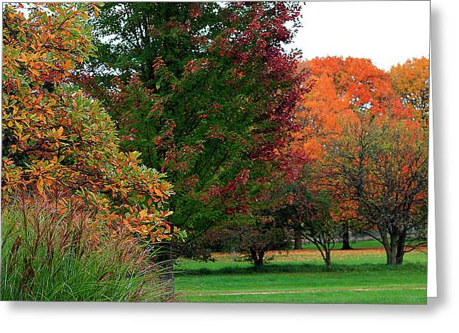 Seasons Greeting Cards - Distant Fall Color Greeting Card by Scott Hovind