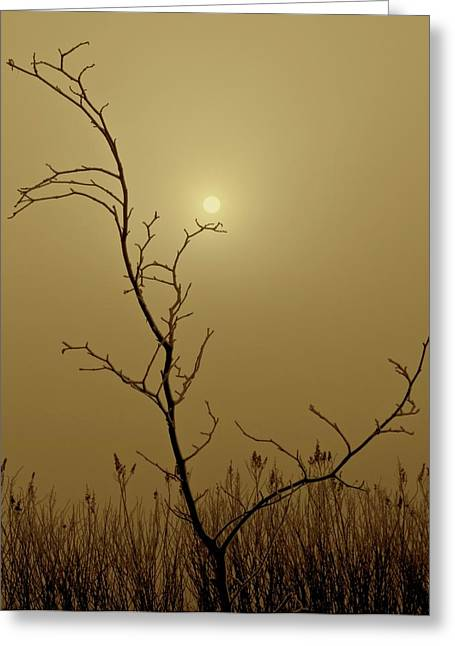 Yearning Greeting Cards - Distant Sun Greeting Card by Odd Jeppesen