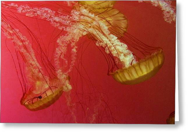 Jelly Fish Greeting Cards - Dive jellies Greeting Card by Vijay Sharon Govender