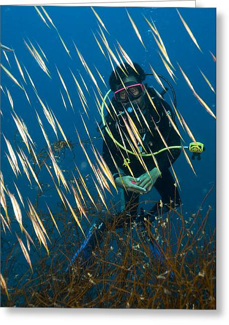 Japanese School Greeting Cards - Diver Amongst A School Of Shrimpfish Greeting Card by Matthew Oldfield