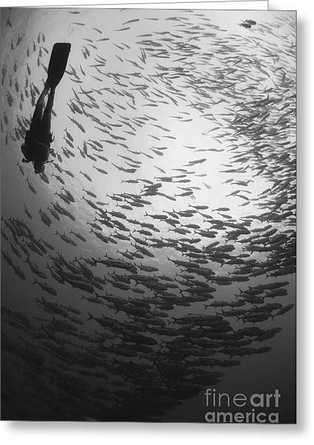New Britain Photographs Greeting Cards - Diver And A Large School Of Bigeye Greeting Card by Steve Jones